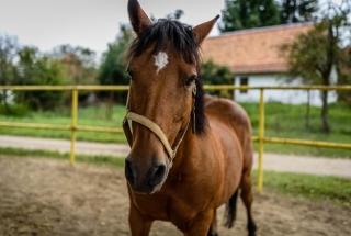 Ranč u Bobiho - Kôň